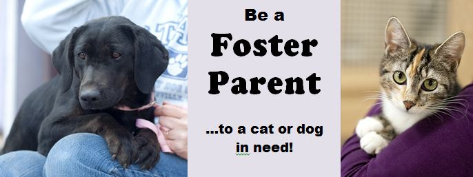 Image result for fostering dogs