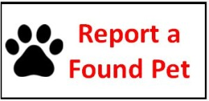 report_a_found_pet