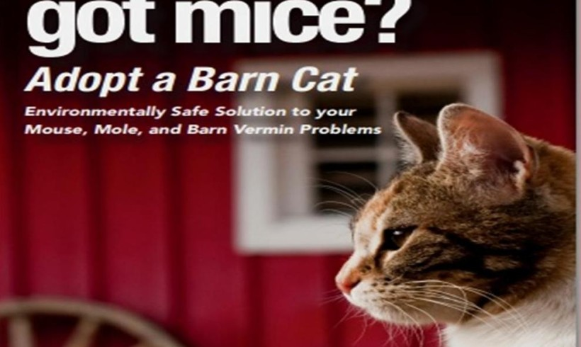 Working Barn Cat Program — Need Help around your Barns and Farms?